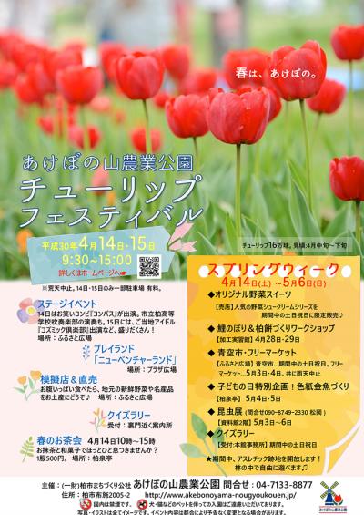 tulip_fes